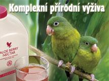 Aloe vera 1l